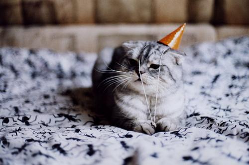Party-hat-cat