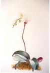 Orchid_jpg_4x5